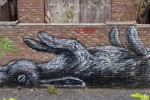 ROA (pic credit Martin Smith)